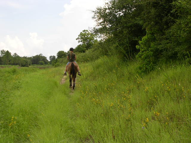 [trail riding bayou]