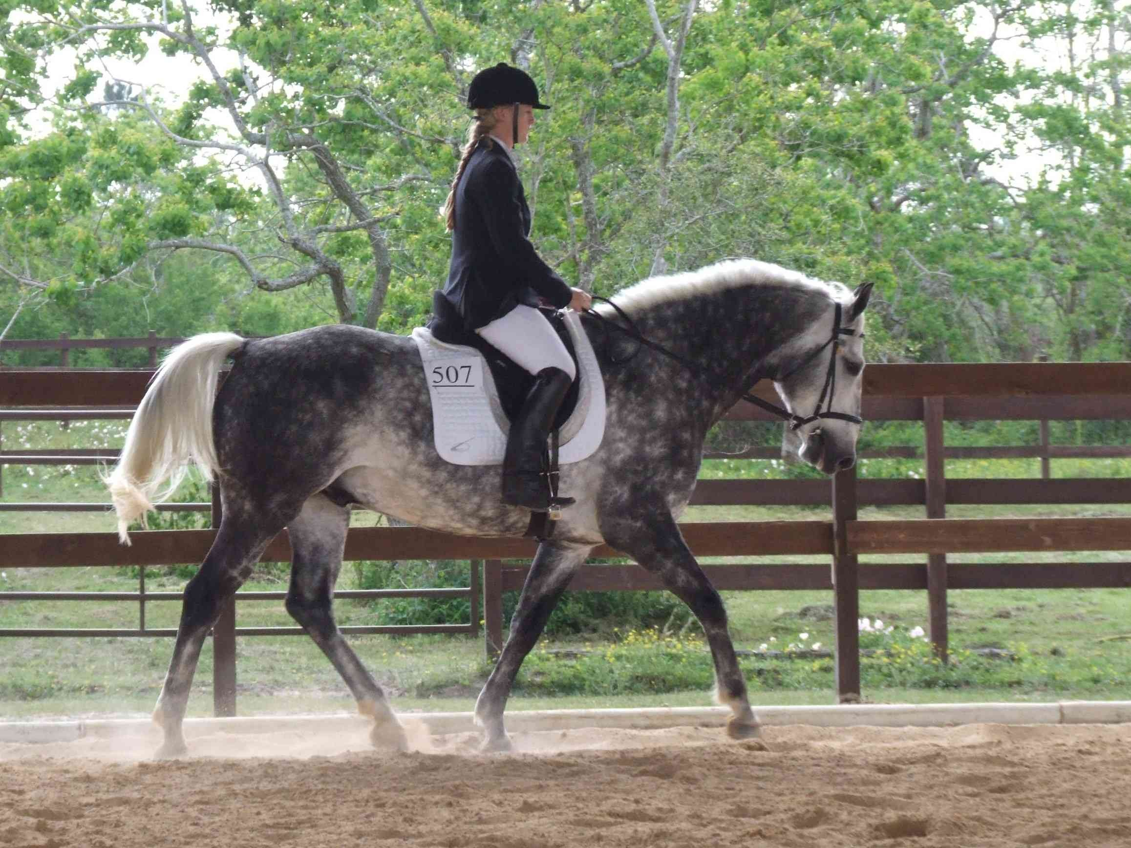 [dressage showing]